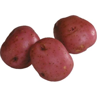 Red Potato (Avg. 0.4lb) image
